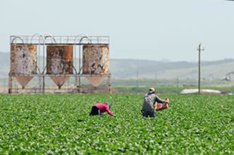 Undocumented farm workers often do work others decline