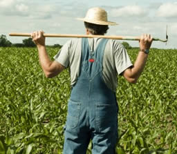 Farmer looking over crops