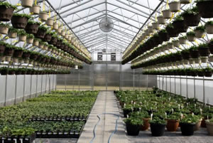Greenhouse Growing For Pleasure And Profit