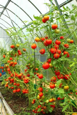 Owning a Greenhouse: The Ins and Outs and Dos and Don'ts