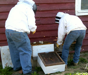 Beekeepers feeding their honeybees
