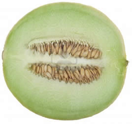 Growing honeydew melons