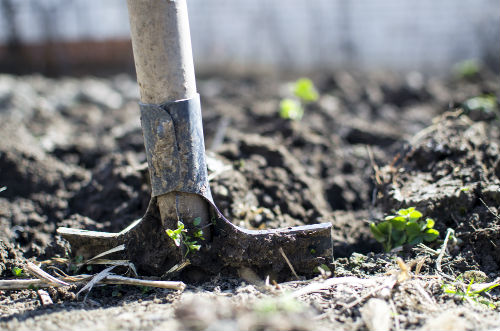 Organic Soil and Soil Conditioning Guidelines