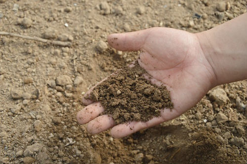How To Test Soil pH — Is Your Soil Acidic or Alkaline?